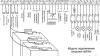 Как подключить 12 вольтовое табло к 24В С2000-АСПТ